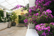 Bougainvillea Courtyard